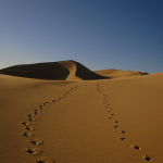 Gobi Desert 2, Mongolia, 2009